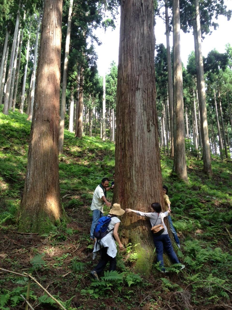 樹ときこりの声を聴くことから家つくりは始まる。