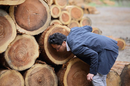 木材の産地にも直接出向きます