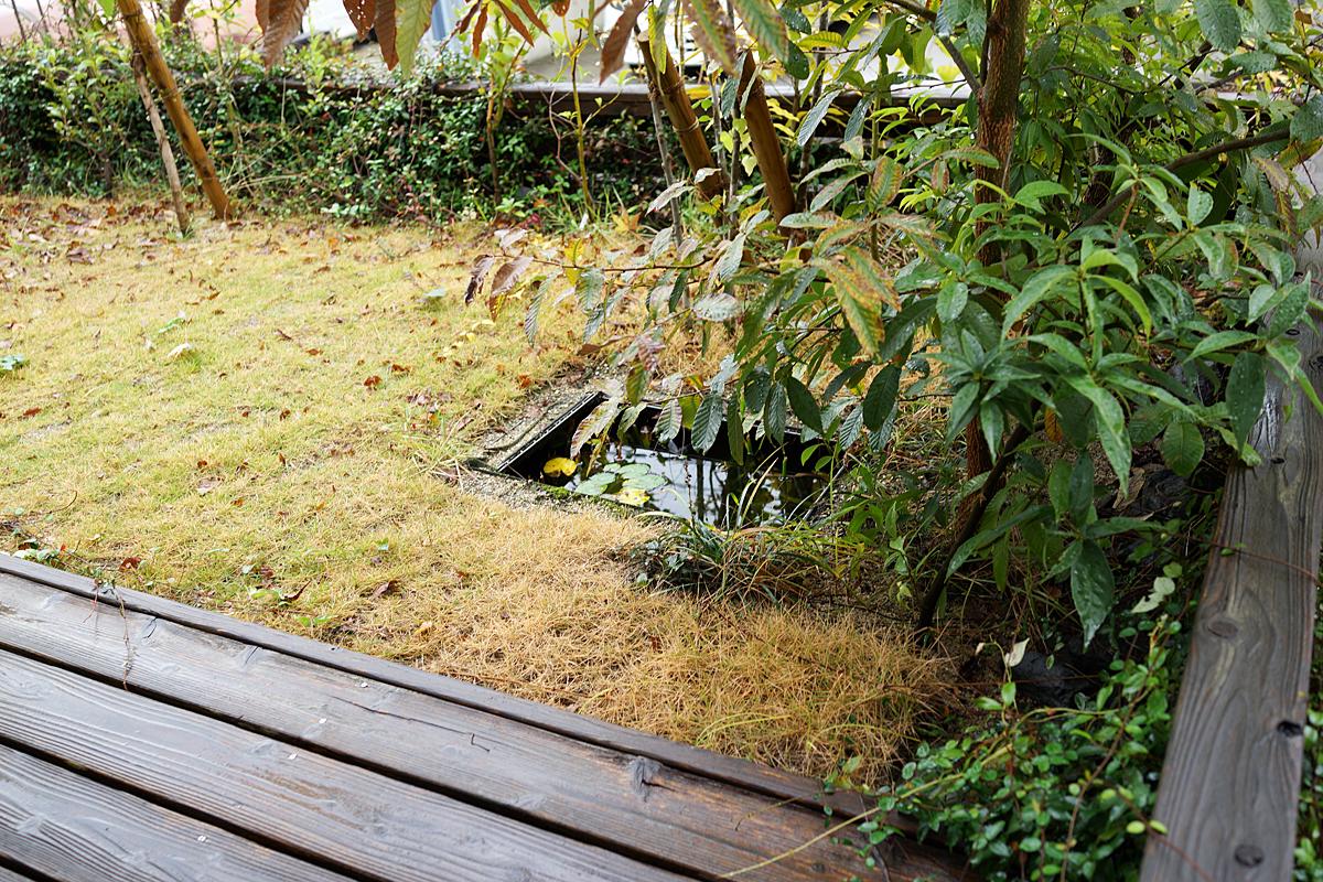 清水さんご自慢の、自邸の庭
