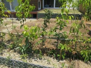 生垣と菜園