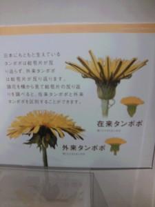 NCM_0886