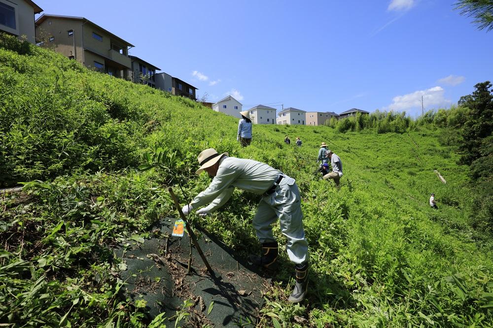 里山草刈り2